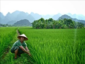 Vietnam is a peaceful country